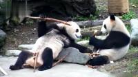 熊猫:不知道为什么,老是有一种别熊手里的笋比较香的错觉