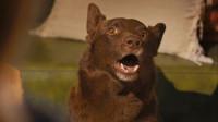 真实故事改编,澳洲最有名的狗,是一只游侠