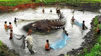 渔夫捕到中国最大淡水鱼,重达上千斤,专家赶到后脸色大变!
