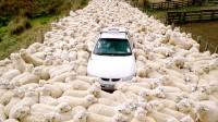 科幻片:绵羊变异成疯羊,不吃草只吃肉,人类被咬就会变成疯羊!