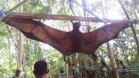 世界上最大的蝙蝠,一直以水果为生,蝙蝠曰:莫挨老子