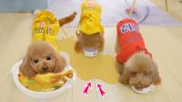 这只泰迪狗太奇葩,为抢吃鸡肉边吃边尿,主人:你也想被炖?