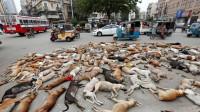 国外街头躺着几千只狗狗尸体,到底怎么回事?知道真相后真心酸!