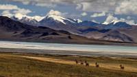 为啥西藏五百公里无人区被人忌讳,其中含的玄机,老驴友都怕出事