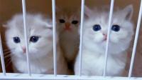 【猫猫TV】小奶猫想钻出笼子,不料脸太大hhh