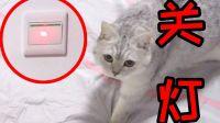 用激光灯控制猫咪关灯,最终结果到底如何?