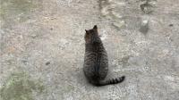 十几岁肥猫 老当益壮
