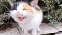 流浪猫在封闭的学校门口等着,见到我就嗖的跑出来吵着要吃的