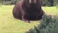 每日一笑小视频-第16期-狗??熊??