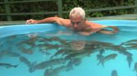 老外将150条食人鱼饿了6天,然后跳进鱼池,让人意外的画面出现了