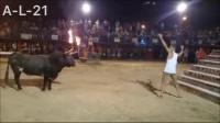 大家看一下牛和人怎么玩