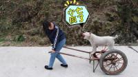 """农村""""疯妹子"""",村里4只田园犬见她就跑,赶快嫁了吧"""