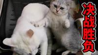 一椅不能容二猫,猫咪不懂先来后到
