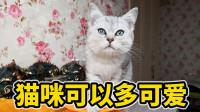 猫咪可以多可爱,玩个玩具就知道