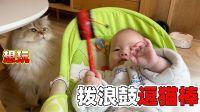 六个月小婴儿第一次逗猫,金渐层麻糬被拨浪鼓敲头,爸爸:快哭了【两个人一条狗】