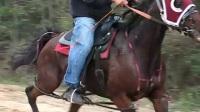 此马真乃千里马也!骑乘骏马疾速经过的马主子