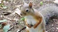 爆笑:单身久了,看松鼠都觉得眉清目秀