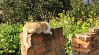【百里洲】vlog24 专业猫片 逗猫钓喵