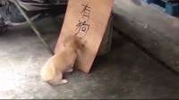 小狗的疯狂求生欲:你不帮我只能自救了!