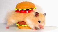 1可爱的小仓鼠从巨型汉堡里成功逃脱