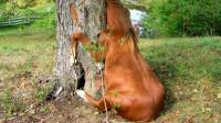 你见过吃肉的植物吗?食人树是什么?看了就知道了