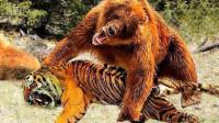 重达1600斤!这种动物比老虎狮子还恐怖,一巴掌能将狮子按地上