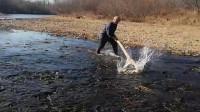 村长来河里收网了,天天都是一盆野生大鲫鱼,看来是要发财了!