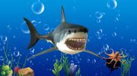 学习认识鲨鱼、大白鲸等7种海洋动物