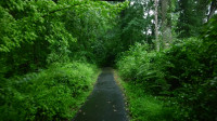 大自然的声音让你入睡和放松轻松地在雨中漫步