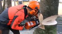 意大利小伙街头锯树,不看技术,看这身装备就知道是专业的