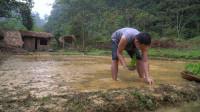 水稻哥 第101集  独自野外生存 原始技能种植水稻技术