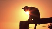 清晨第一缕阳光升起,光影下猫咪在发光!