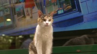 猫咪每天在大街上等谁?靠卖萌不吃吃喝