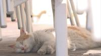 夏天的马耳他,猫咪只在傍晚和清晨活动