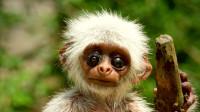 奇幻片:人类在机器猴眼中藏摄像头,结果拍到猴子们的沙雕行为!