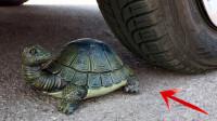 减压实验:汽车vs乌龟 车轮碾压松脆柔软的东西 请勿模仿2
