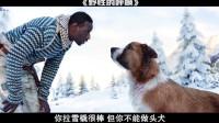 野性的呼唤--比忠犬八公更好看的狗故事电影