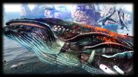 神奇动物月鲸,苏菲与其超时光捕捉