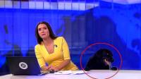 女主持人正在直播新闻,却发生意外?收视率首创第一