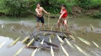 农村胖哥带着老婆,用树叶搓成汁,抹在树尖上,放在河里装机关,一会功夫,抓到大鱼