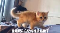 猫咪:你是不是想饿死我,好继承我的猫砂?你于心何忍!