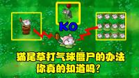 植物大战僵尸:两种猫尾草击落气球僵尸的办法,你真的知道吗?