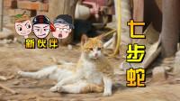 """随风家园:新成员""""七步蛇""""的由来,是三郎意外被咬伤?"""