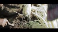 【水瓶座电影工作室】原创创意短片《收获》