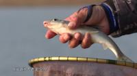 很多年没钓过这种鱼了,  有钓鱼人认识吗
