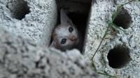 扒开砖头,救出一只可怜的小猫,它因拆迁而被遗弃