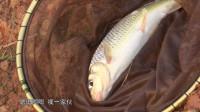 诡异漂相背后藏着一条特别的鱼!