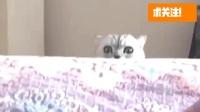 """搞笑福利:萌宠:猫咪团子太霸气,看到小猫咪争宠眼神里充满""""杀气"""",太搞笑了-www.nbitc.com,慧之家"""