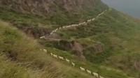 搞笑福利:河南小哥进山挖风湿药遇到放羊的,这阵容像不像鬼子进村,太搞笑了!-www.nbitc.com,慧之家