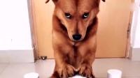 搞笑福利:萌宠:狗狗拆家后,这委屈的眼神太搞笑了!-www.nbitc.com,慧之家
